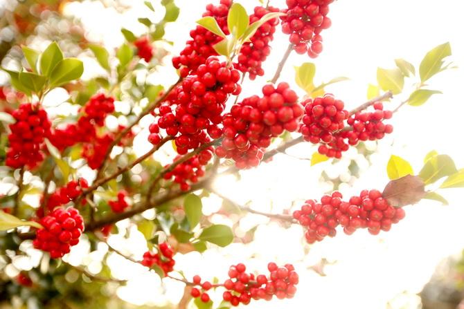 The Cherry Blossom Girl - A la faveur de l'automne 09
