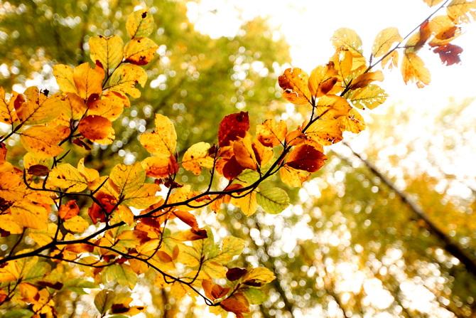 The Cherry Blossom Girl - A la faveur de l'automne 12