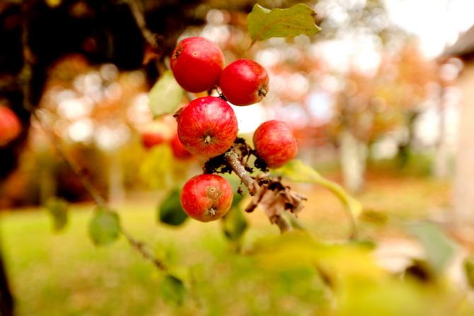 The Cherry Blossom Girl - A la faveur de l'automne 19