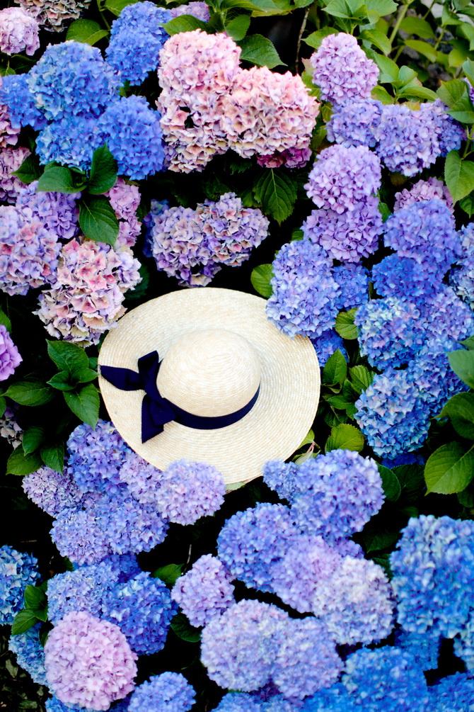 The Cherry Blossom Girl - Les Fleurs hortensia 05