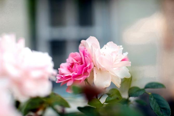 The Cherry Blossom Girl - La ferme des Sablons 02
